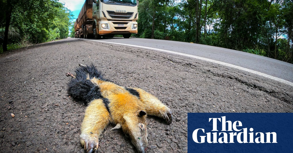 'Highway of death': animals pay ultimate price on Brazil's most dangerous road for wildlife