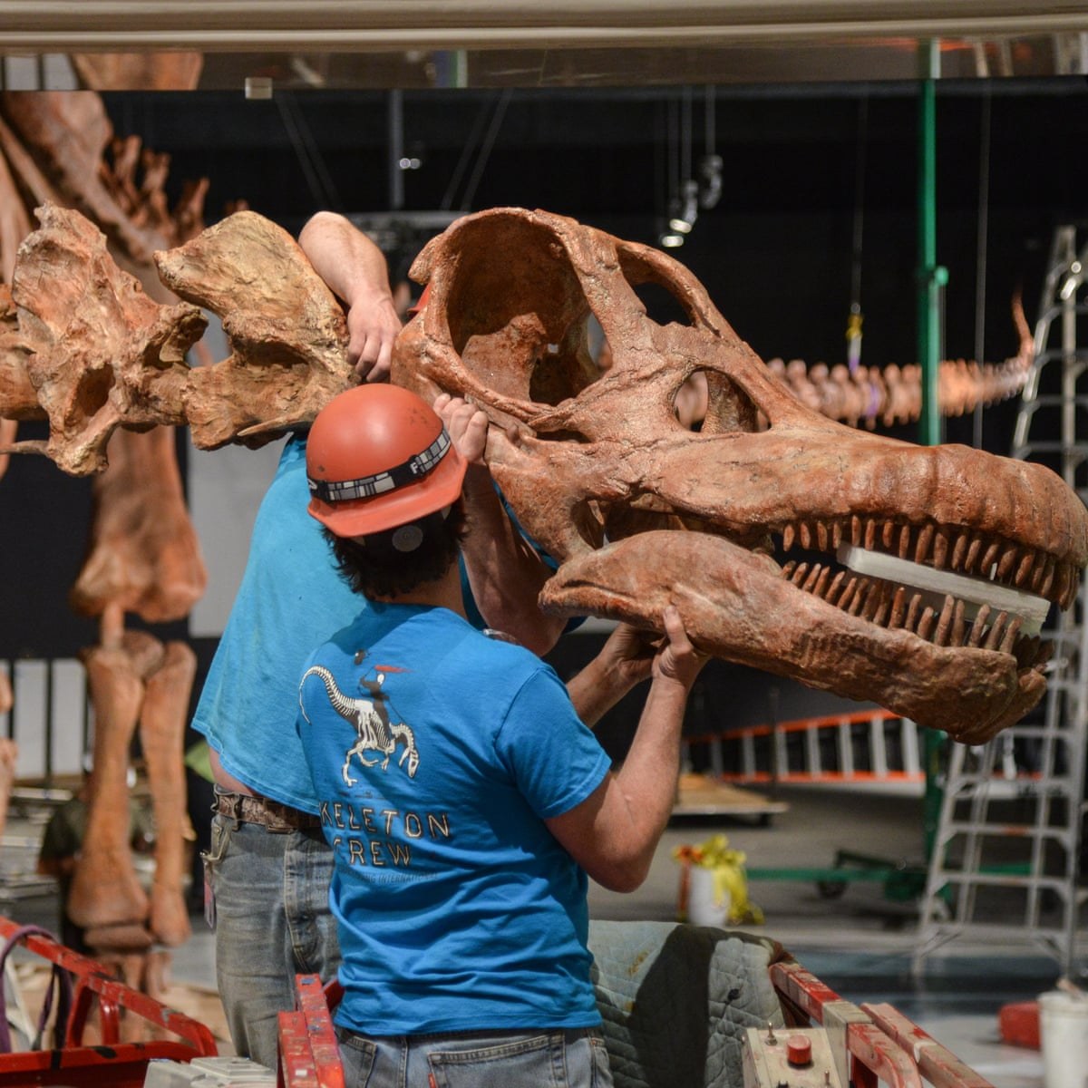 World S Biggest Dinosaur Skeleton Unveiled In New York Dinosaurs The Guardian