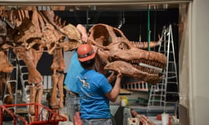Technicians install the Titanosaur cast in the Miriam and Ira D Wallach Orientation Center at the American Museum of Natural History in New York.