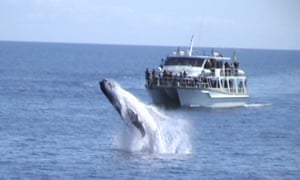 whale-watching boat in Hervey Bay