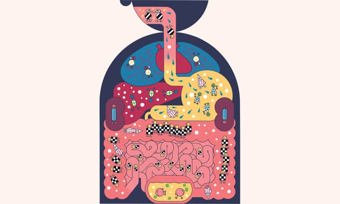 The human microbiome: why our microbes could be key to our health   Science    The Guardian