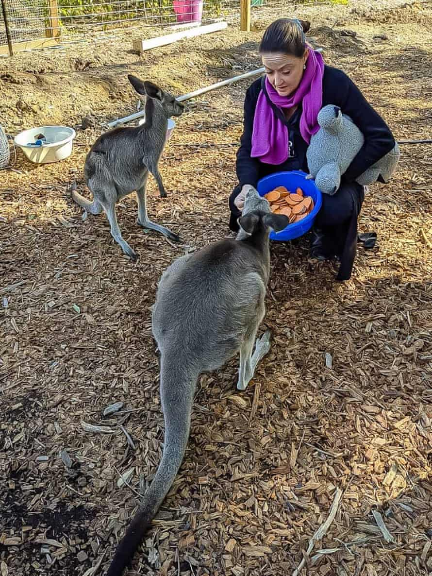 Wildlife rescuer Angela Christodoulou with rescued kangaroos Charlotte and Violet