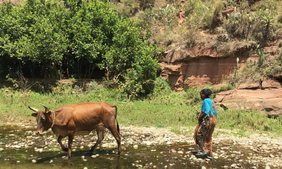 """Water is now abundant in Gergera after """"treatment"""" of the catchment with gabions, planting of trees and elephant grass, and natural regeneration of vegetation"""