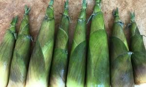 Raw Nastus Elatus bamboo shoots
