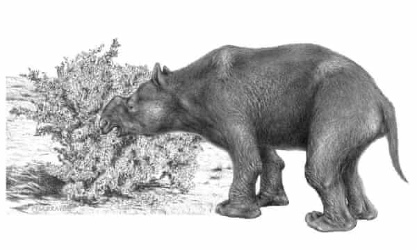 An artist's impression of an adult Diprotodon optatum, a giant megafauna herbivore thought to have weighed around three tons and have been approximately four metres long.