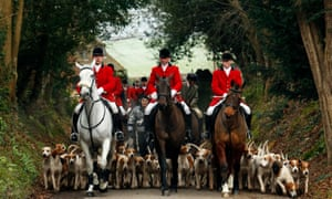 Since a ban stopped foxhunting, hunts continued with dogs chasing down a pre-laid scented trail instead of a fox.