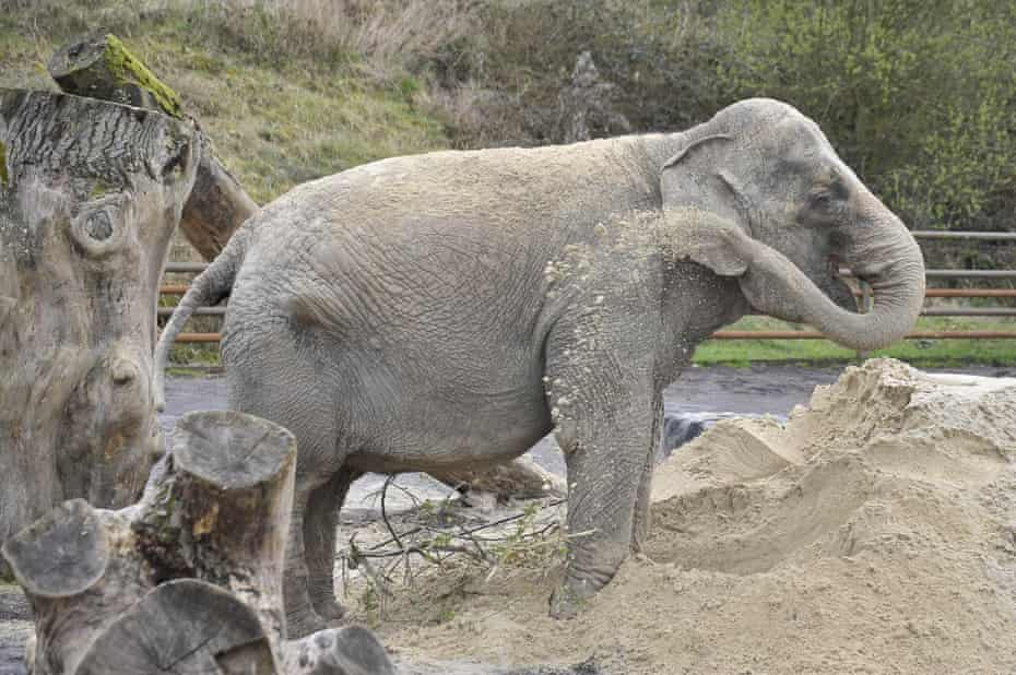 Anne the elephant at Longleat safari park in 2011.