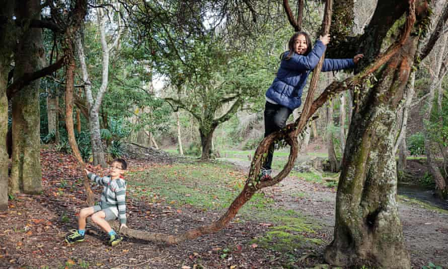Children playing on a vine swing