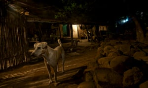 Over the last 20 years, more than 420 people in Mumbai have died from rabies as the result of a dog bite.