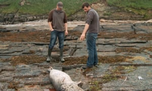 Fishermen with dead seal Of Fish and Foe - film still