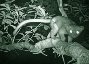 Images from Trapped show exotic animals captured by camera traps.