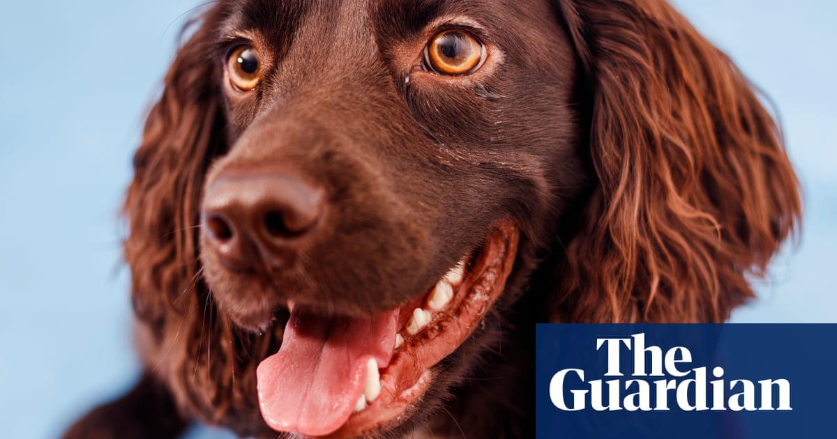 'Covid-19 has an odour, and the dogs are detecting it': meet the canine super-squad sniffing out the virus