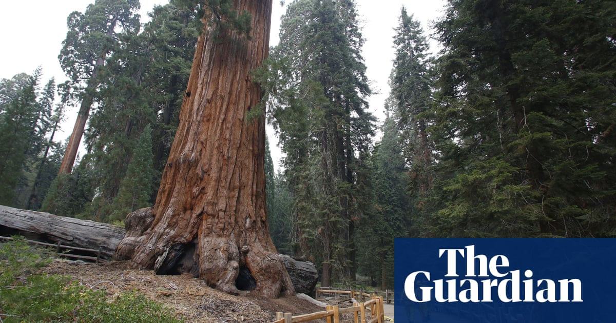 Ancient sequoia trees threatened by growing wildfire in California's Sierra Nevada