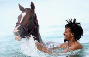 Bridgetown, Barbados: A horse from the Garrison Savannah
