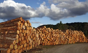 Logs for export in a timberyard