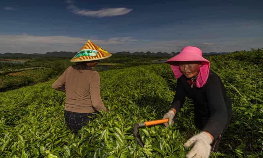 Antara 40% hingga dua pertiga dari 1,4 miliar penduduk China masih pedesaan