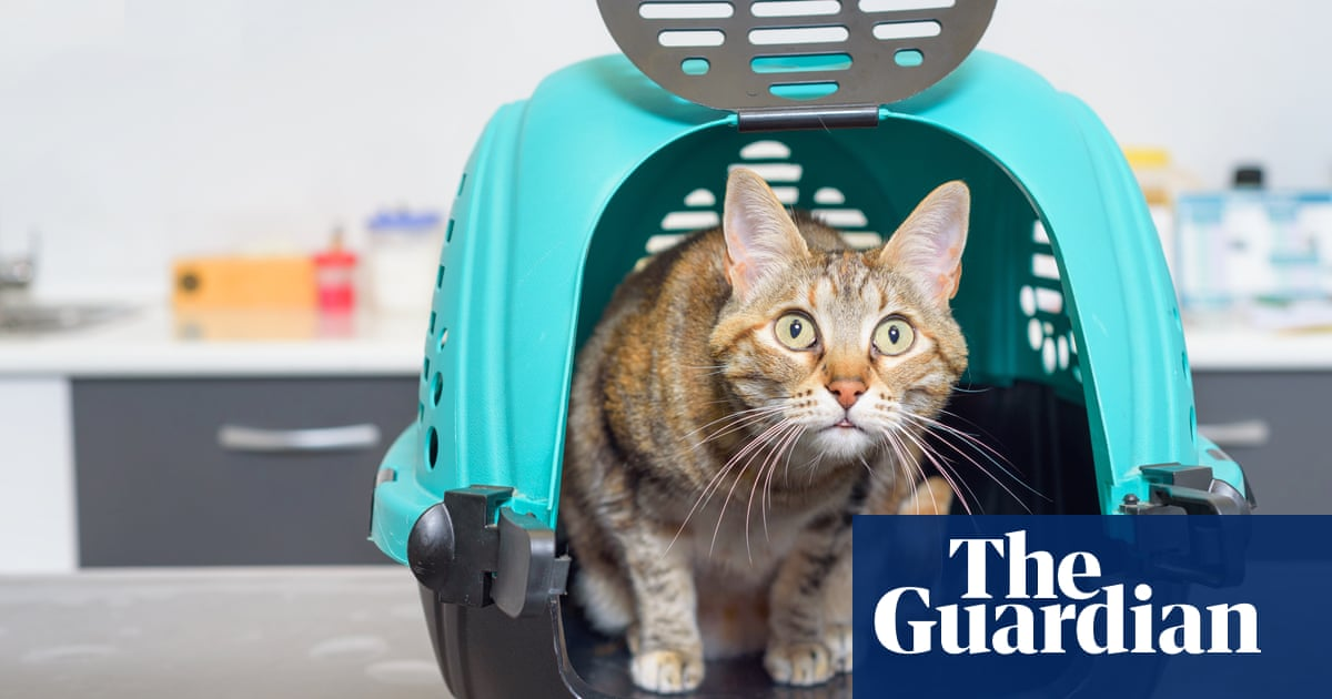 Tim Dowling: whatever the vet thinks, my cat is not called Graham