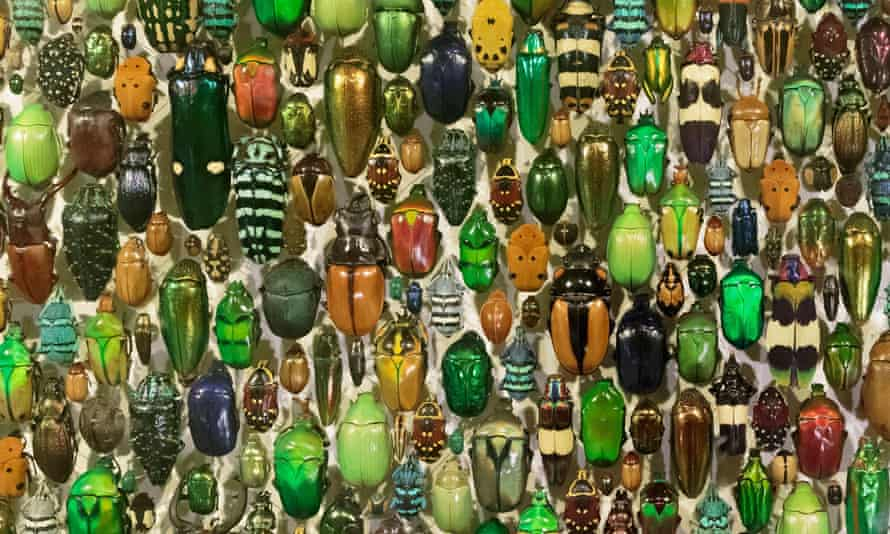 A display of beetles at the Montreal Insectarium, Quebec, Canada.
