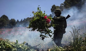 Mexican soldiers take part in an operation to destroy a poppy plantation in Guerrero State, Mexico on 8 April 2016.