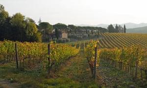 Vineyards around San Sano