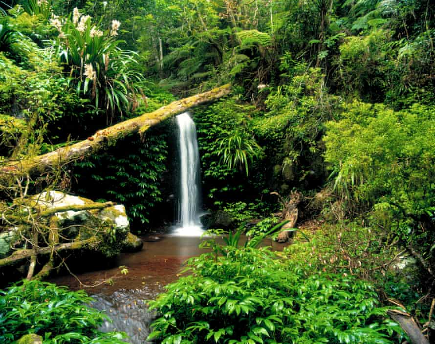 Waterfall in the rainforest at Lamington national park.