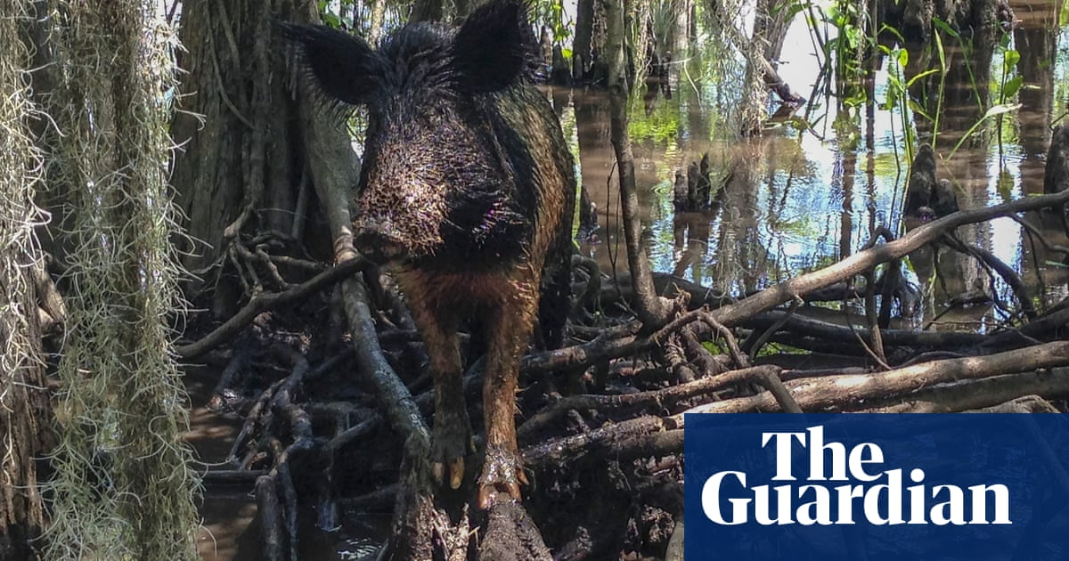 Feral hogs spotted in Canada national park for first time