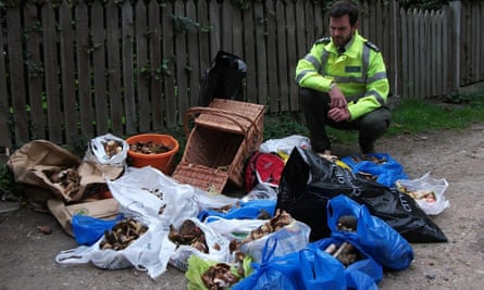 An Epping Forest keeper with some of the hauls of fungi seized from foragers.