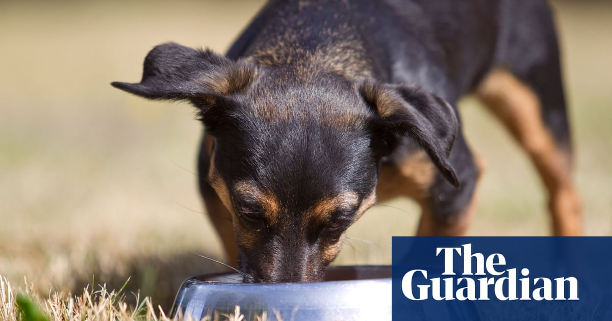 Paw diet: can vegan food and insect kibble really win over our pets?