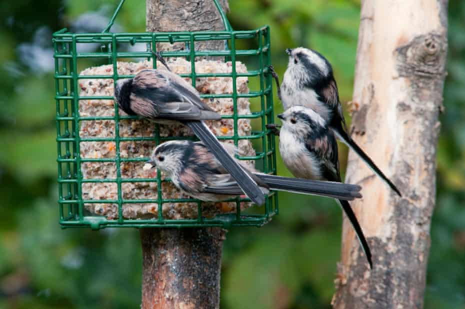 Recorded sightings of the long-tailed tit rose by 44% since last year, RSPB figures show.