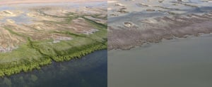 Views of seaward mangrove fringes showing foreshore sections of minor (left side) and extreme (right side) damage as observed in June 2016 between Limmen and MacArthur rivers, NT. These might effectively also represent before and after scenarios, but together show how some shoreline sections have been left exposed and vulnerable. NC Duke
