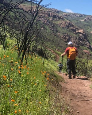 Fire poppies on a trail in the Santa Monica mountains.