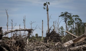 Land cleared for palm oil plantation in the Leuser ecosystem, Indonesia.