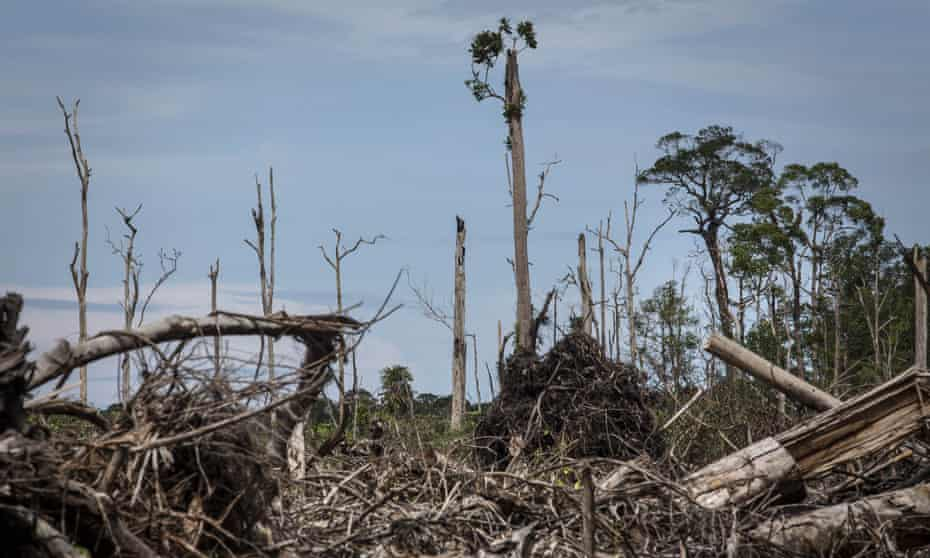 A view of land cleared of peatland forest for palm oil plantation in South Aceh, Aceh province, Indonesia, The peat swamp area is the habitat of the Sumatran orangutan, now on the verge of extinction.
