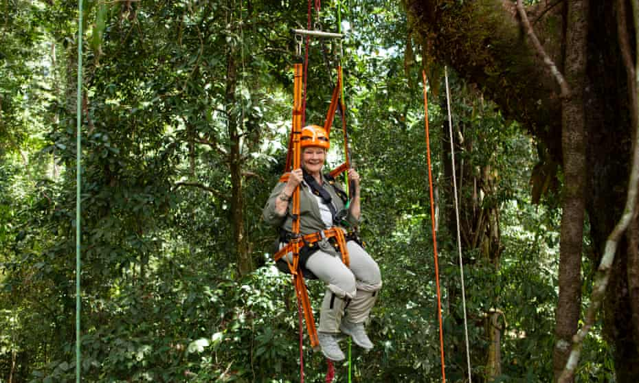 Judi Dench is hoisted up one of the tallest trees in the forest (higher than Nelson's Column).