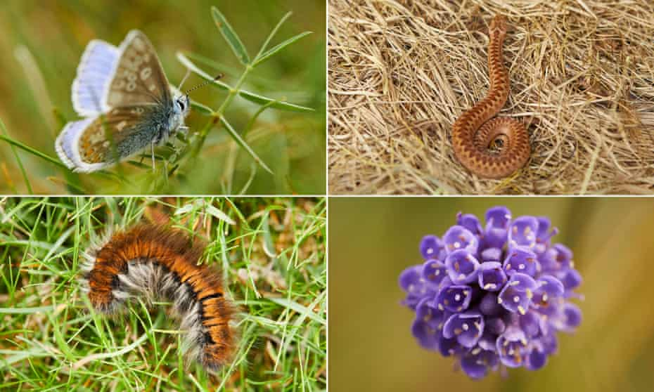 Waterhall is already providing a home to flora and fauna including common blue butterflies, adders, devil's-bit scabious and fox moths