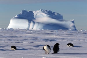 Adelie penguins near China's research icebreaker Xuelong in Prydz Bay, Antarctic