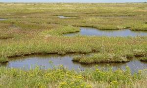 A tidal saltmarsh in Norfolk, England.