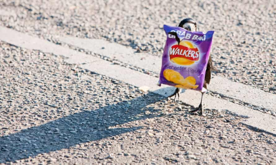 A rook holding a discarded Walkers crisp packet