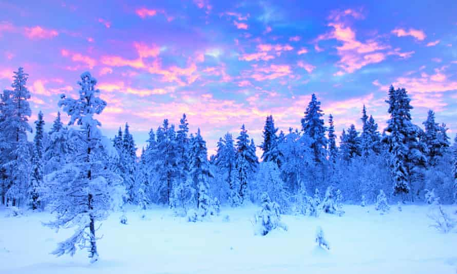 Snowy forest in Sweden