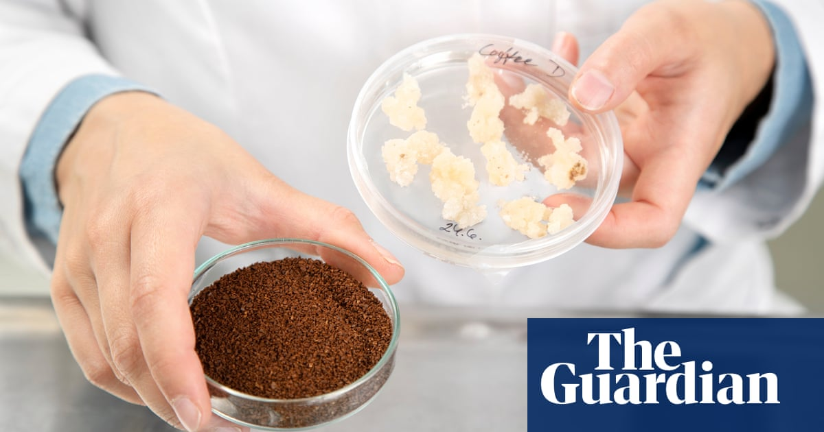 Eco-friendly, lab-grown coffee is on the way, but it comes with a catch