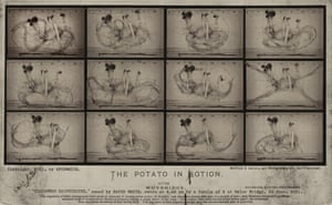 The Potato in Motion – a potato photographed at 1 millisecond intervals reveals constant and chaotic movement invisible to the naked eye