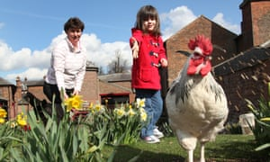 The estate of Tatton Park, England. A young girl in a bright red coat feeding the chickens at Tatton Park's Home Farm.