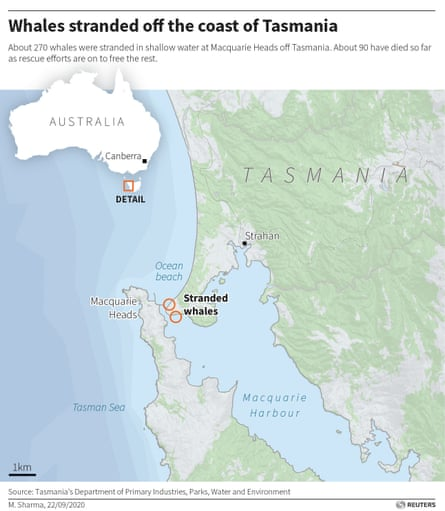 A map supplied by Reuters showing the location where 270 whales were stranded. A further 200 whales were found on Wednesday morning about 10km west.