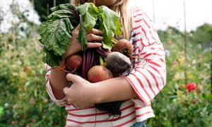 Pick of the crop: enjoy your harvest, but it's unlikely you'll be able to feed the family from your backyard.