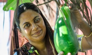 Quality seed mini-packets include a variety of vegetables such as bottle gourd.