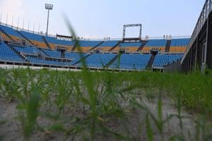 Grass growing
