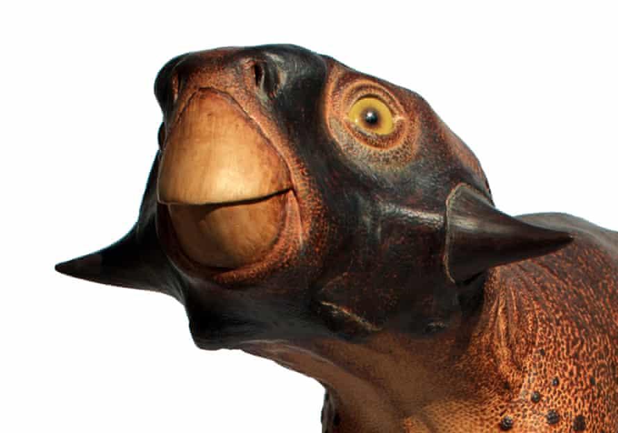 Reconstruction of the dinosaur Psittacosaurus, by palaeoartist Robert Nicholls.
