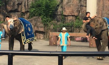 Elephants performing at the Hangzhou Safari Park in June 2016