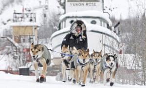 Yukon Quest musher Allen Moore enters Dawson City, Yukon in second place.