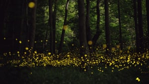 Luminous landscapes – Hotaria parvula